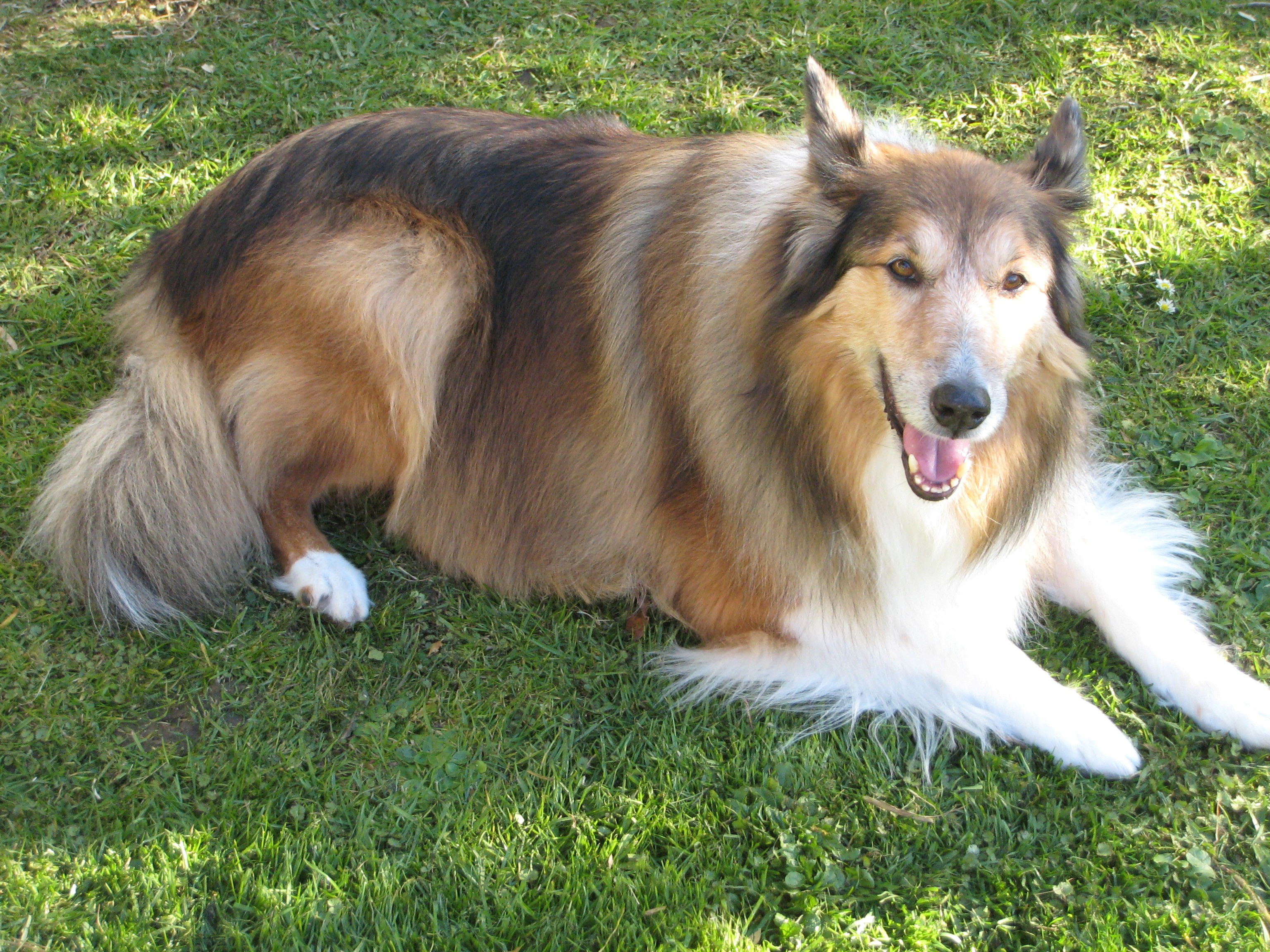 Lassie Stager