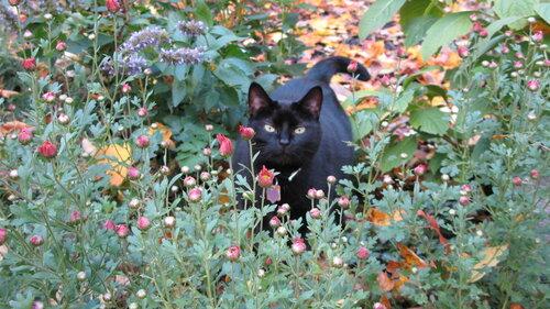 Black cat in flower bed