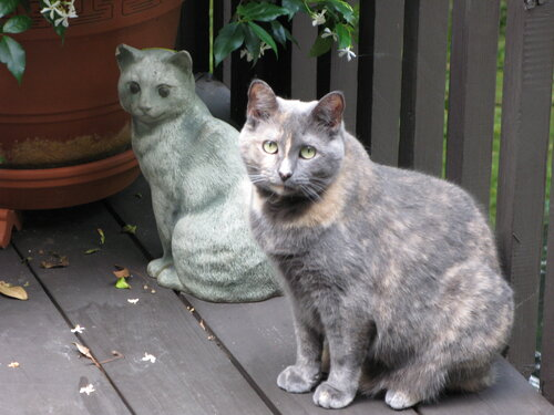 Cat sitting next to statue of a cat