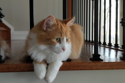 Cat on a stairwell