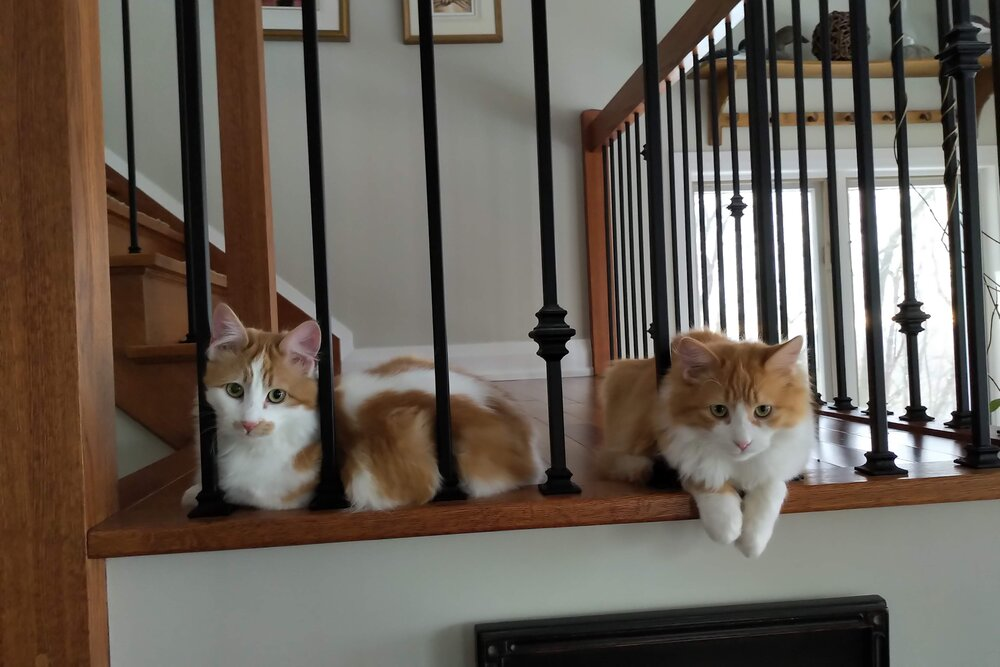 two cats on a stairwell