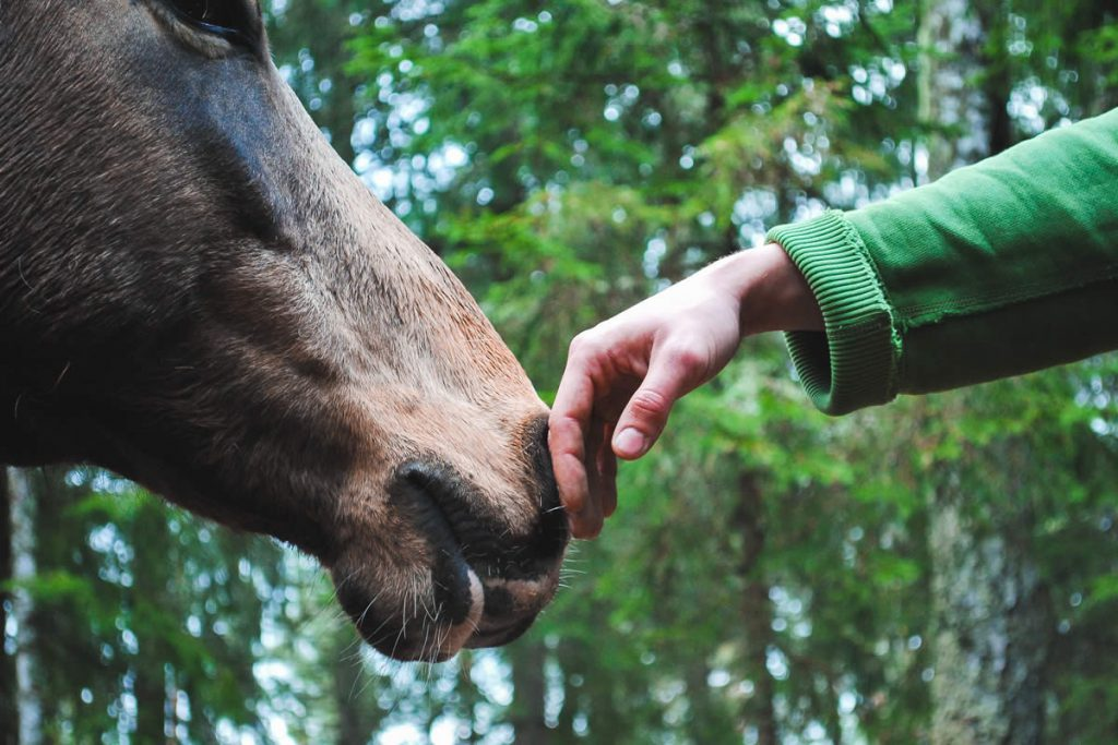 Human hand reaching out to horse